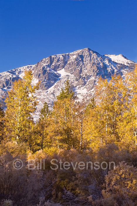 An image of autumn leaves in front of a snowy Mount Tallac near Lake Tahoe. A fall landscape image with yellow Aspen trees in front of snowy mountains is a classic. It's harder to capture than you imagine. Some years the trees will be perfect but there will be no snow. Other years the snow will come after the leaves have fallen. Patience is one of the keys to successful scenic photography.