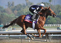 Zagora, trained by Chad Brown, exercises in preparation for the upcoming Breeders Cup at Santa Anita Park on October 31, 2012.