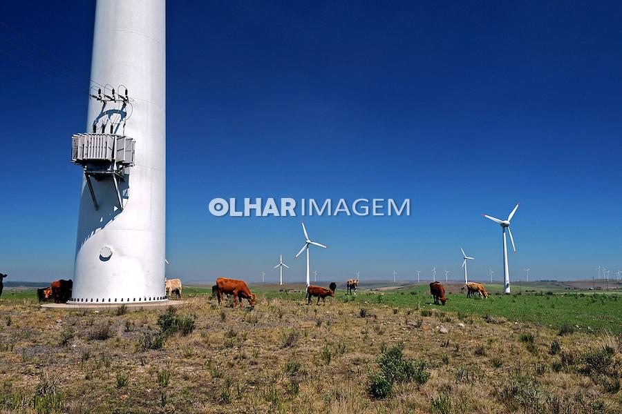 Geradores de energia eolica. Palmas. Parana. 2010. Foto de Zig Koch.