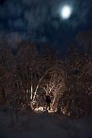 Vinny in alcove of birch, Alaska.