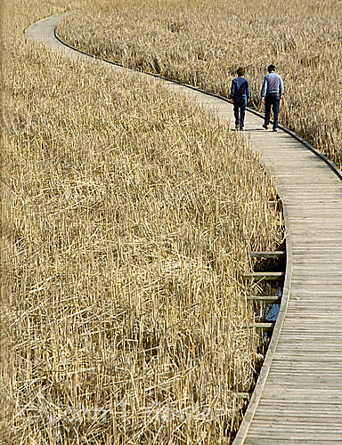 Boardwalk at Point Pelee Nat. Park, Ontario