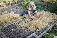 Gardener spreading straw mulch on raised bed