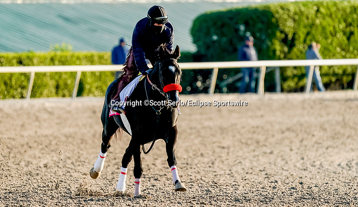 January 22, 2020: Next Shares gallops as horses prepare for the Pegasus World Cup Invitational at Gulfstream Park Race Track in Hallandale Beach, Florida. Scott Serio/Eclipse Sportswire/CSM
