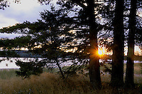 The sun sets into Pancake Bay on Lake Superior, behind a conifer from the shore of Pancake Bay Provincial Park in western Ontario, Canada.