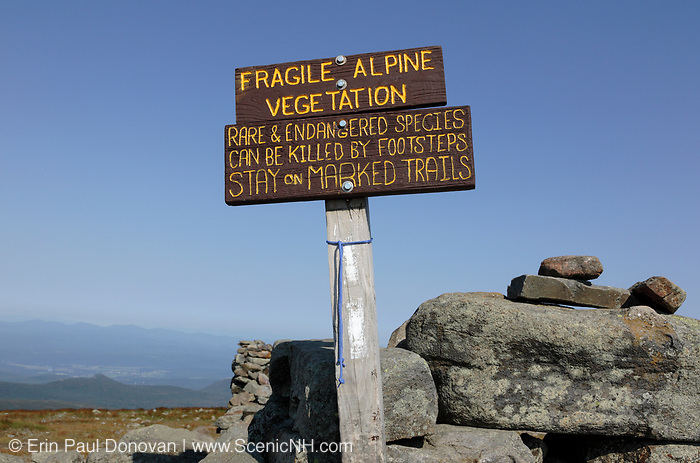 Appalachian Trail - The summit of Mount Moosilauke during the summer months in the White Mountains, New Hampshire.