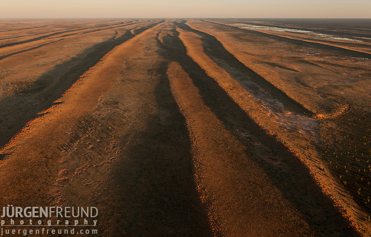 Aerial - Simpson Desert Regional Reserve. The many sand dunes of the Simpson Desert very rarely get vegetation this thick. The desert dune is very green at this time when normally it is just bare and sandy. Now it is a challenge to find wide sandy patches.