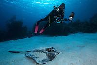 Stingray and underwater photographer