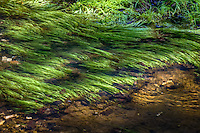 A small creek flowing over the spring grass near the Parker Hickman Homestead along the Buffalo national River and Arkansas.