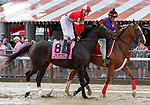 McCracken (no. 8) in the Post Parade for the  Whitney Stakes (Grade I), Aug. 4, 2018 at the Saratoga Race Course, Saratoga Springs, NY.  Ridden by Brian Hernandez, Jr.  (Bruce Dudek/Eclipse Sportswire)
