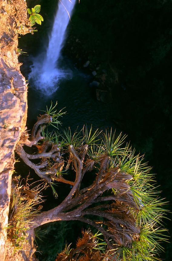 Bridal Veil (Veu de Noiva) Falls tumble in the Chapada dos Guimaraes (tilde on final a) National Park in central Brazil.