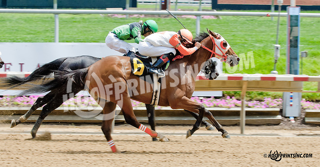 My Man Dan winning at Delaware Park on 6/17/13