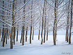 Idaho, North, Kootenai County, Rathdrum. A grove of trees flocked in snow on the Rathdrum Prairie in winter.