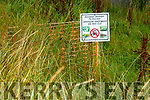 Japanese Knotweed at the site of the proposed Gaelcholaiste Chiarrai in Hawley Park on Monday.