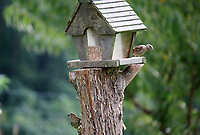 Cute birdhouse resting on a tree stub with two finches - Free Stock Photo.