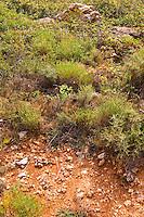 Domaine d'Aupilhac. Montpeyroux. Languedoc. Terroir soil. France. Europe. Soil with stones rocks.