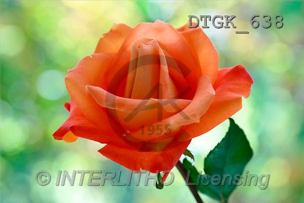 Gisela, FLOWERS, photos(DTGK638,#F#) Blumen, flores, retrato