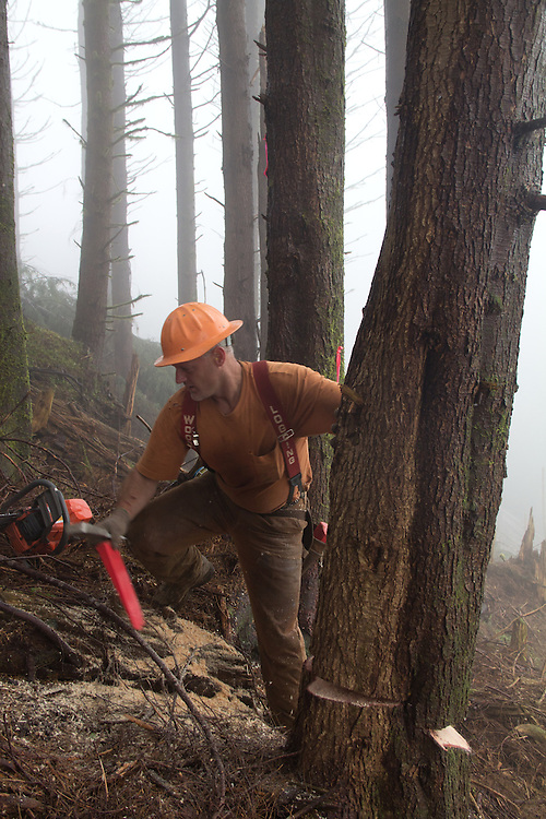 Nature Conservancy, Washington Chapter, Ellsworth Creek Preserve, forest restoration, forest thinning, blowdown prevention, Jeff Rippet, Rippet Timber Cutting, Emerald Edge Project, Willapa Bay, Pacific County, Washington Coast, Washington State, Pacific Northwest, United States,