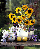 Interlitho, FLOWERS, photos+++++,sunflowers,table,KL16413,#f#