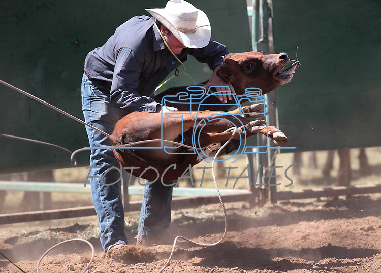 Austin Carrasco competes in the calf roping event at the Minden Ranch Rodeo in Gardnerville, Nev., on Sunday, July 22, 2012..Photo by Cathleen Allison
