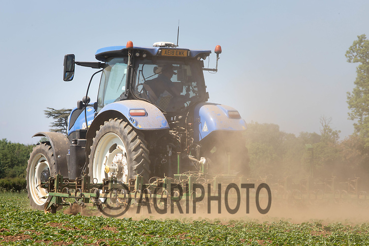 21.5.2020 Mechanically hoeing sugar beet in Lincolnshire <br /> ©Tim Scrivener Photographer 07850 303986<br />      ....Covering Agriculture In The UK....