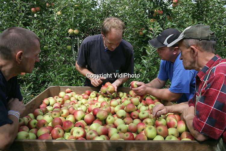 Foto: VidiPhoto..PUIFLIJK - Poolse werknemers van fruitteeltbedrijf Gebr. Van de Zandt uit Puiflijk zijn begonnen met de voorpluk van de elstar-appel. Twee weken eerder dan normaal. Een voorpluk is financieel interessant omdat er op dit moment nog maar weinig nieuw geoogste appels worden aangeboden op de veilingen.