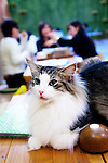 """January 15, 2015, Tokyo, Japan : A cat takes a rest on a table at the """"Temari No Uchi"""" Cat Cafe in Tokyo, Japan. Temari No Uchi, a Neko Cafe (cat cafe) based in Kichijoji where visitors can watch and interact with 19 cats whilst eating or having a coffee break. The store opened in April 2013 and allows to customers to play with cats and to escape from the stresses of the city life. The entrance fee is 1200 JPY (9.75 USD) on weekdays and 1600 JPY (12.99 USD) on weekend with discounts after 7pm. Drinks and food are charged separately. According to the shop staff most visitors are Japanese women but also men and children visit this cafe. The fist cat cafe in the world opened in Taipei, Taiwan in 1998, and the fist Japanese store was opened in Osaka in 2004. (Photo by Rodrigo Reyes Marin/AFLO)"""