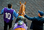 HALLANDALE BEACH, FL - JANUARY 27: Gun Runner in the paddock before the Pegasus World Cup Invitational on Pegasus World Cup Invitational Day at Gulfstream Park Race Track on January 27, 2018 in Hallandale Beach, Florida. (Photo by Scott Serio/Eclipse Sportswire/Getty Images)