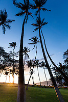 The sun sets behind a low-angle view of palm trees on Maui.