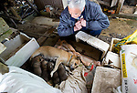 Naoto Matsumura watches over a bitch and her offspring that he number among the pets and other animals he looks after that were left behind in the government-imposed no-go zone about 10 km from the Fukushima Daiichi Nuclear Power Plant in Tomioka, Fukushima  Prefecture, Japan on 01 Mar. 2012. . .Photographer: Robert Gilhooly