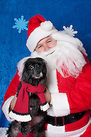 Katie, a cocker spaniel, poses for a holiday photo with Santa at Pet Pros in Redmond, WA to help raise money for Dogs Deserve Better on December 11, 2010. (photo by Karen Ducey)