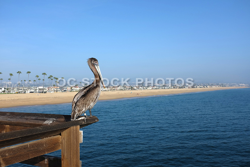 Newport Beach Coastline