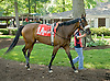 Mikey Likes It before The Beautiful Day Stakes at Delaware Park on 5/31/12