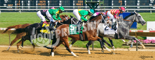 The field in The Obeah Stakes before I'm a Chatterbox won at Delaware Park on 6/11/16