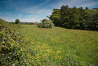 Grass meadow, Chipping, Lancashire.