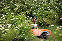 2017_06_15_elderflower_harvest