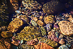 Colorful smooth pebbles beneath the surface of Rattlesnake Creek in western Montana