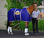 ARLINGTON HEIGHTS, IL - AUGUST 11 The Pizza Man, winner of th e 2015 Arlington Million paraded before the G1 Arlington Million S. at Arlington Park on August 11, 2018 in Arlington Heights, IL. (Photo by Jessica Morgan/Eclipse Sportswire/Getty Images)
