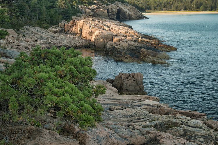 Along Acadia National Park's Ocean Drive, huge slanted rocks and dark-green spruce trees are the dominate features of the shoreline.