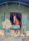 Divine Fortune the evening before the 2012 Smithwick