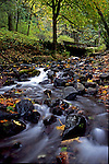 Wahkeena Creek, Fall color, Columbia River Gorge