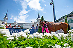 LOUISVILLE, KENTUCKY - MAY 02: Bellafina,the contendor for Kentucky Oaks, is schooling at the paddock during Thurby at Churchill Downs in Louisville, Kentucky on May 02, 2019. Kaz Ishida/Eclipse Sportswire/CSM
