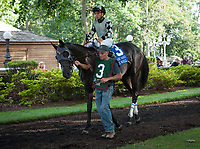 WILMINGTON, DE - JULY 8: It Tiz Well #3 in the paddock before winning the G3 Delaware Oaks at Delaware Park in Wilmington, Delaware. (Photo by Sophie Shore/Eclipse Sportswire/Getty Images)