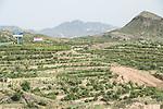 Great Green Wall Trees planting China
