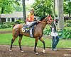 RB Madymoiselle before The Delaware Park Arabian Oaks (grade II) at Delaware Park on 8/6/16