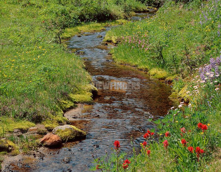 Stream with Alpine Wildflowers, Mount Adams