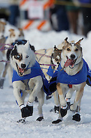 Tom Thurston team makes the turn at Cordova Street and 4th avenue in downtown Anchorage, Alaska during the ceremonial start of the 2011 Iditarod