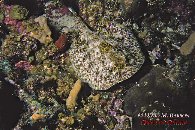 Unidentified Ray