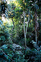 jungle. Photos for Jasai´s catalogue of the houses of Memo and the surrounding area