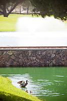 Birds in Pond at Cerritos Iron-Wood Golf Course