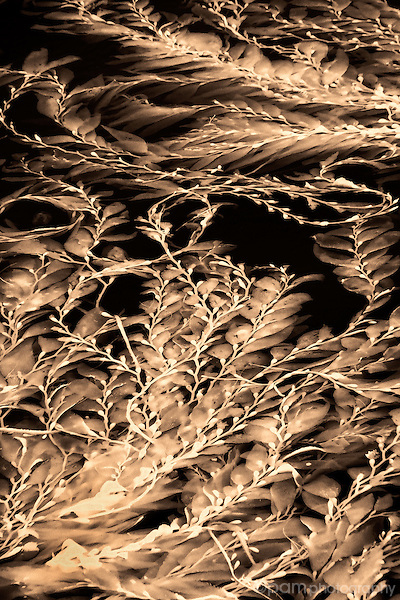 Abstract of kelp floating on the surface of the ocean.